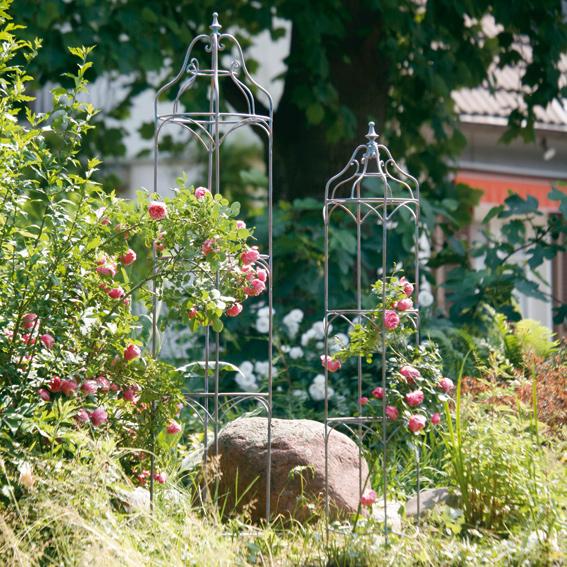 rosen obelisk notting hill kletterrosen kaufen. Black Bedroom Furniture Sets. Home Design Ideas