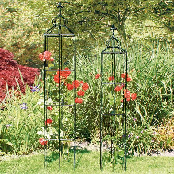rosen obelisk hyde park kletterrosen kaufen. Black Bedroom Furniture Sets. Home Design Ideas